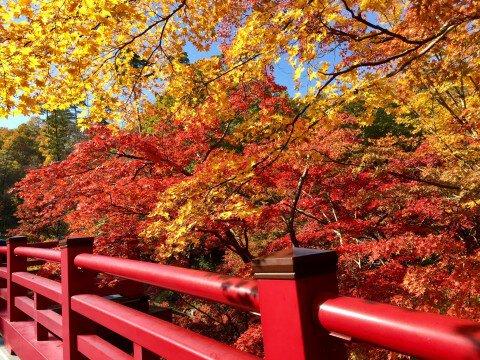 弥彦公園の紅葉写真