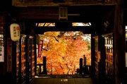 軽井沢(熊野皇大神社)の紅葉