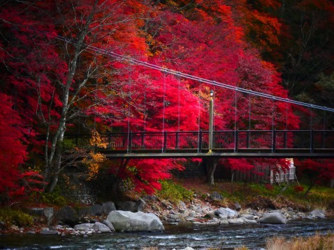 塩原の紅葉写真