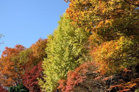 大井平公園の紅葉写真