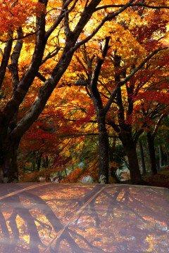 タカドヤ湿地の紅葉写真