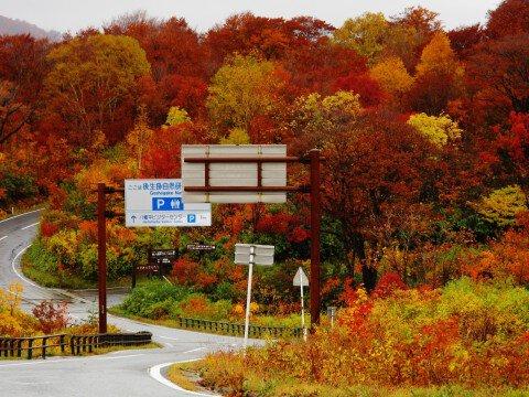 十和田八幡平国立公園 八幡平地域 八幡平アスピーテライン(御在所)の紅葉写真
