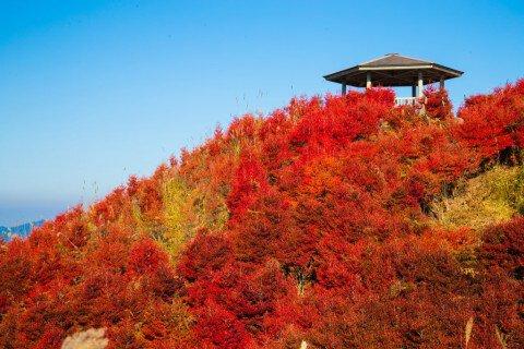 高野龍神スカイライン(国道371号線)(護摩壇山周辺)の紅葉写真