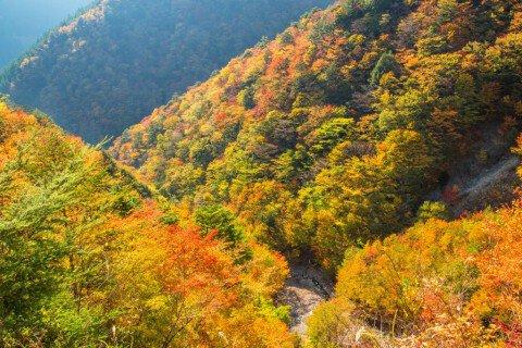 高野龍神スカイライン(国道371号線)(五百原渓谷)の紅葉写真