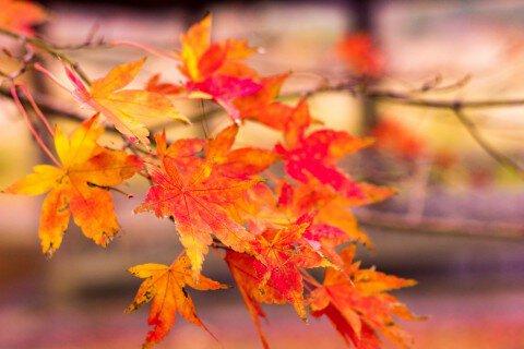 蒜山高原の紅葉写真