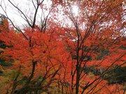 裏ヤビツの紅葉