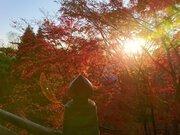 播州清水寺の紅葉