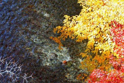大芦渓谷の紅葉写真