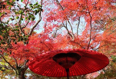 瑞宝寺公園の紅葉写真