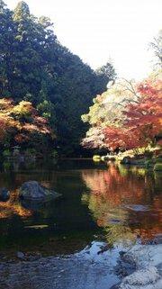 成田山新勝寺 成田山公園の紅葉