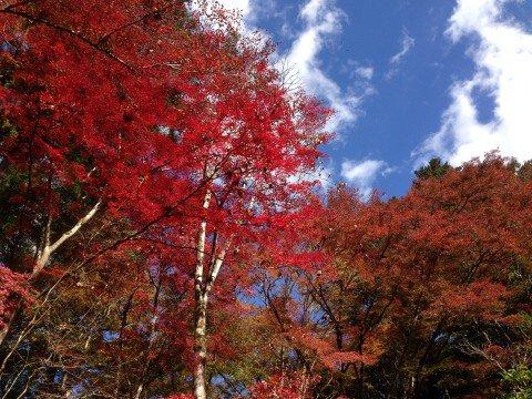 東郷公園の紅葉写真