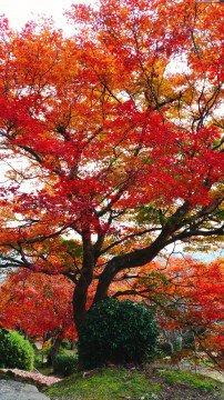 尾関山公園の紅葉写真