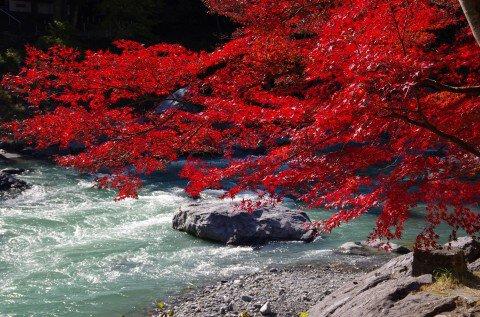 御岳渓谷の紅葉写真