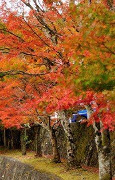 丹沢湖・箒沢の紅葉写真