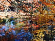 軽井沢(雲場池)の紅葉