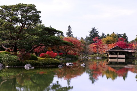 国営昭和記念公園の紅葉写真