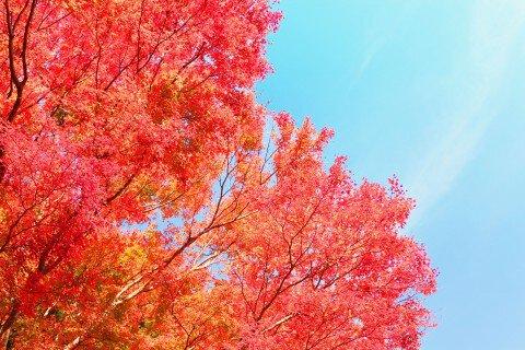 筑波山の紅葉写真