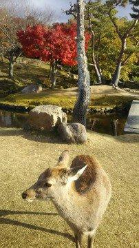 奈良公園の紅葉写真