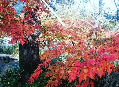 上高地(大正池、河童橋周辺)の紅葉写真