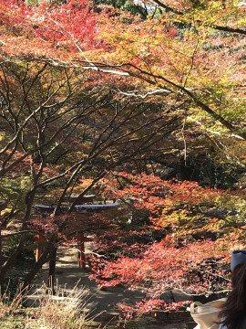竈門神社の紅葉写真