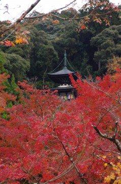 永観堂 禅林寺の紅葉写真