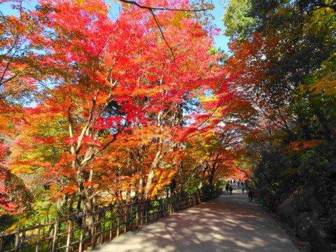 名古屋市東山動植物園の紅葉写真