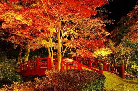 熱海梅園の紅葉写真