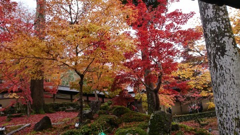 大本山 永源寺の紅葉写真