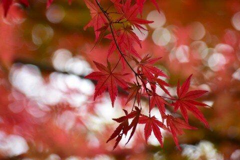 高尾山の紅葉写真