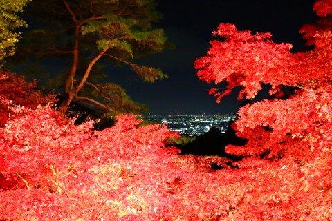 大山寺・大山阿夫利神社下社の紅葉写真