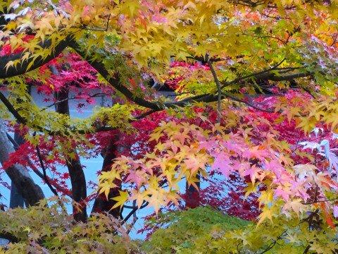 大本山 東福寺の紅葉写真