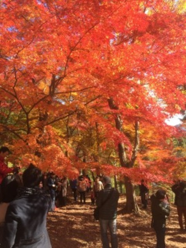 最上山公園 もみじ山の紅葉写真