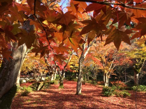 洛北(圓光寺)の紅葉写真