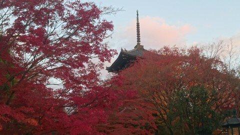 真如堂(真正極楽寺)の紅葉写真