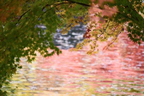 成田山新勝寺 成田山公園の紅葉写真