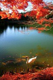 南伊奈ヶ湖周辺の紅葉