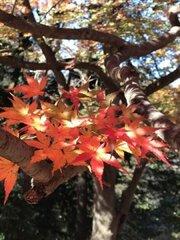 石神井公園の紅葉