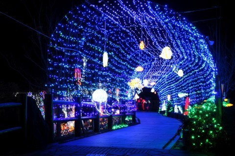 道の駅 おおとう桜街道のイルミネーション写真