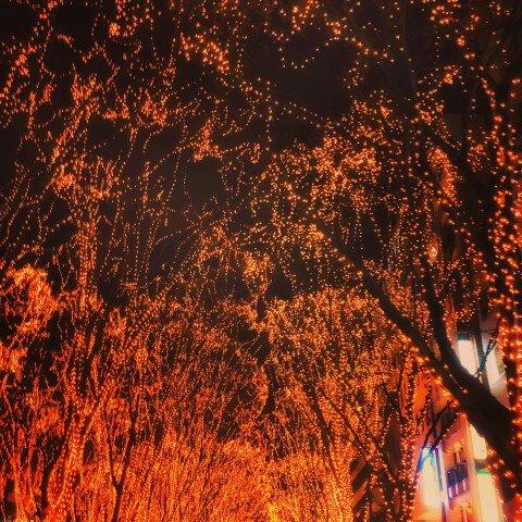 定禅寺通のイルミネーション写真