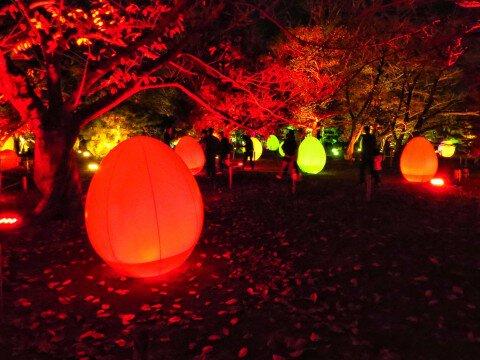 舞鶴公園のイルミネーション写真