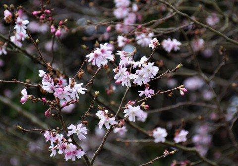 ひろしま遊学の森 広島県緑化センター