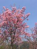 紀美野町「花いちばん」