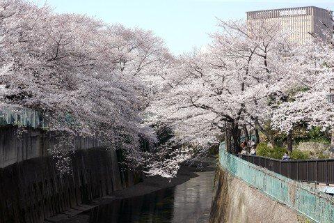 石神井用水(音無川)