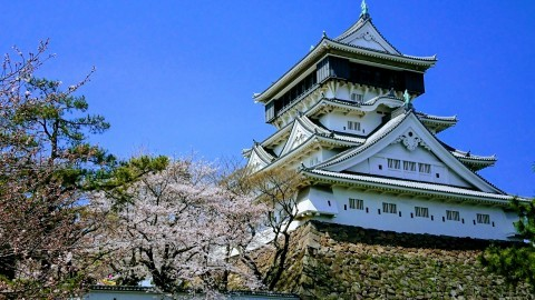 【桜・見頃】勝山公園(小倉城)の桜名所写真
