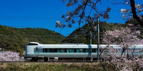 【桜・見頃】山中渓の桜