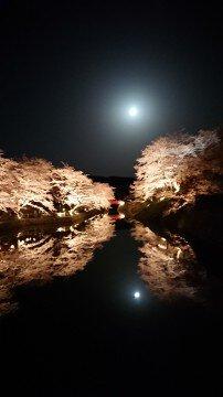 【桜・見頃】鹿野城跡公園の桜名所写真