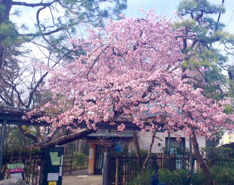 練馬区 牧野記念庭園