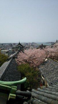 【桜・見頃】和歌山城の桜名所写真