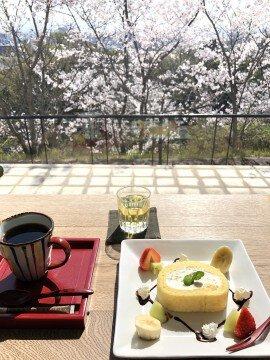 高松市内のカフェにての桜名所・お花見写真
