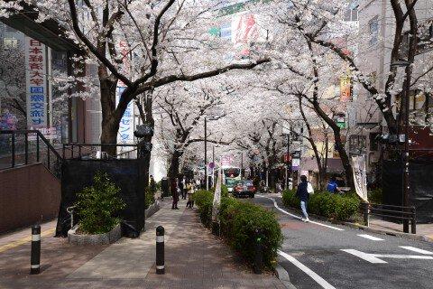 渋谷桜丘 桜坂